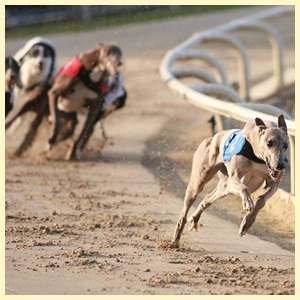 East Anglia Race Nights Video Greyhound Racing