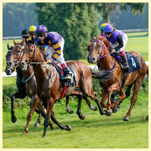 East Anglia Race Nights Video Horse Racing